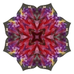 Bromelliad lotus mandala