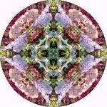 Buddleia Sally Holmes rose mandala