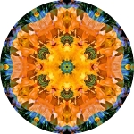 California white poppy collage mandala