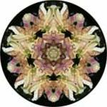 Flower with bee and iris mandala