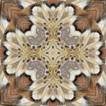 Prometha moth with background mandala