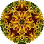 Sunflower circle mandala
