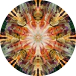 Sunset lacy iris collage mandala
