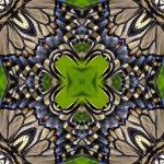 Swallowtail butterfly square mandala