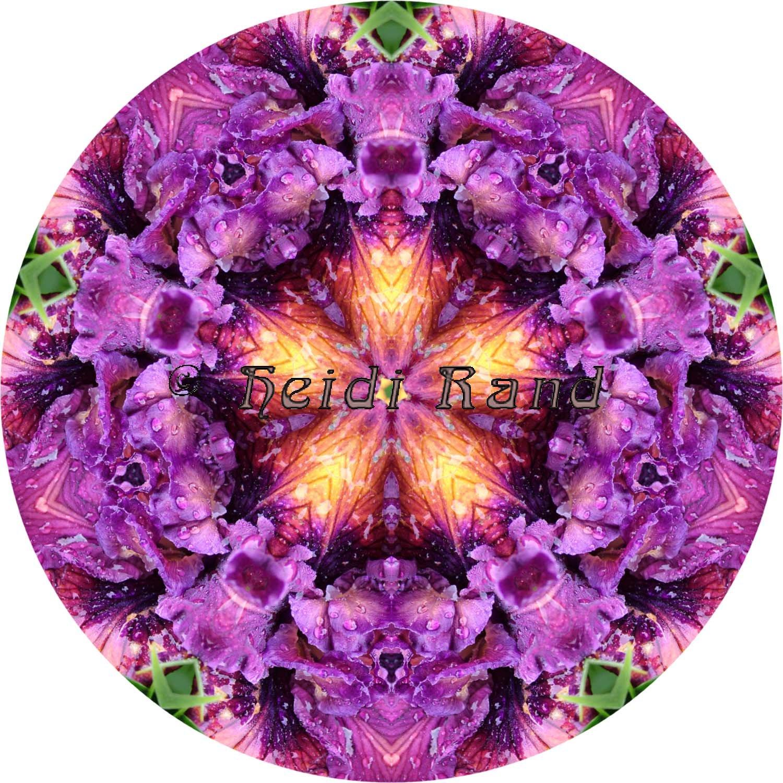 Velvety iris mandala