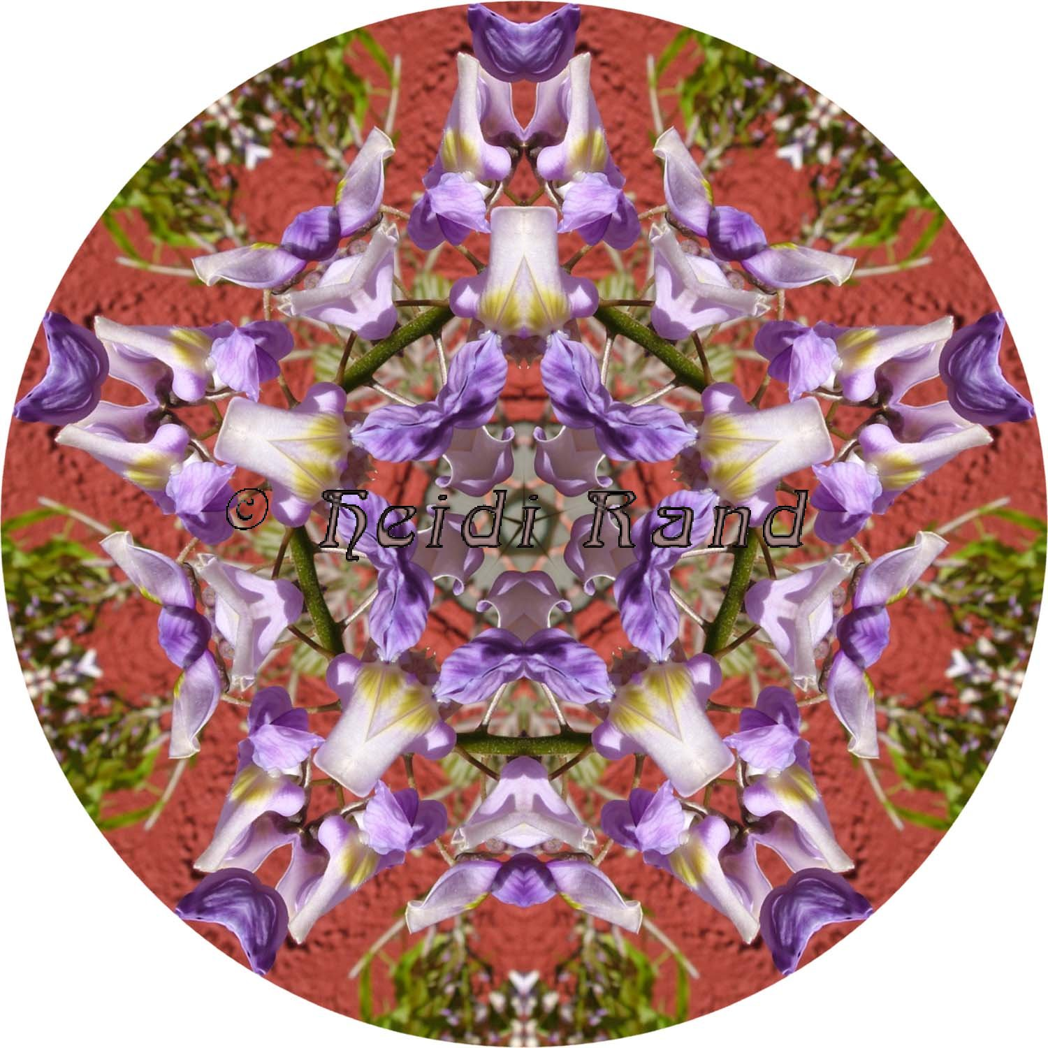 Wisteria against house mandala