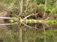 Rorschach trees Tilden Park
