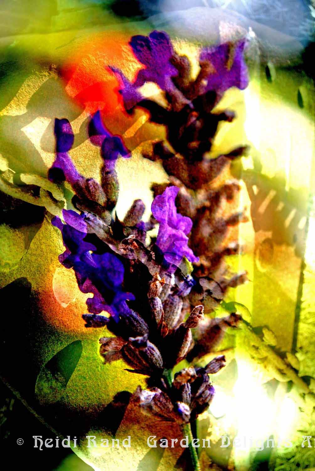 Lavender and rust collage