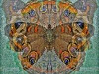 Buckeye butterfly collage