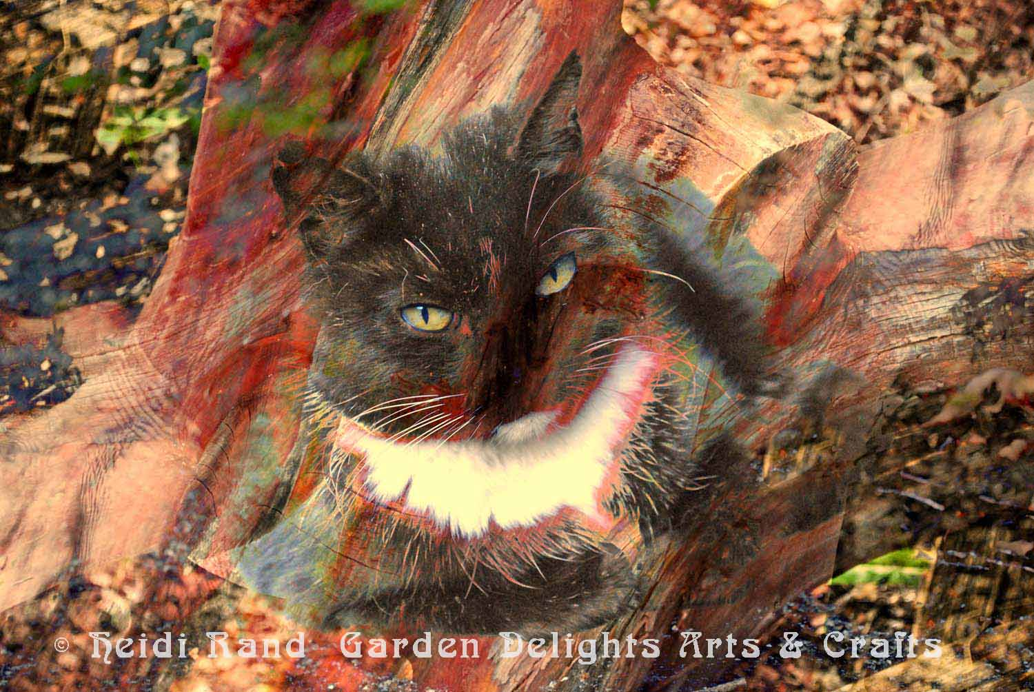 Tuxedo cat and Madrone collage