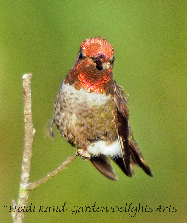 Hummingbird on branch