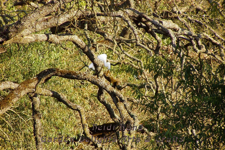 Egret in Roseville