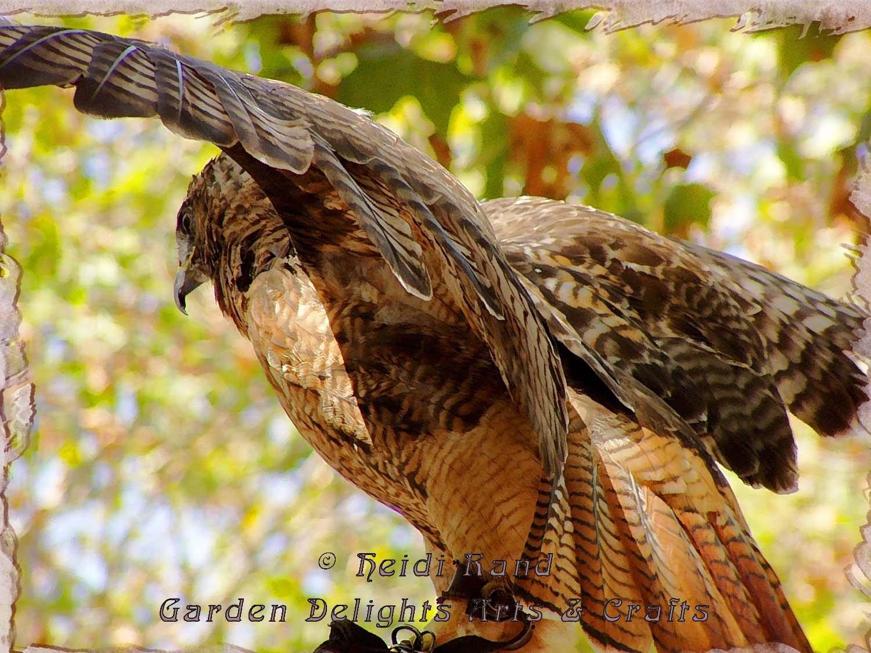Hawk wing arching