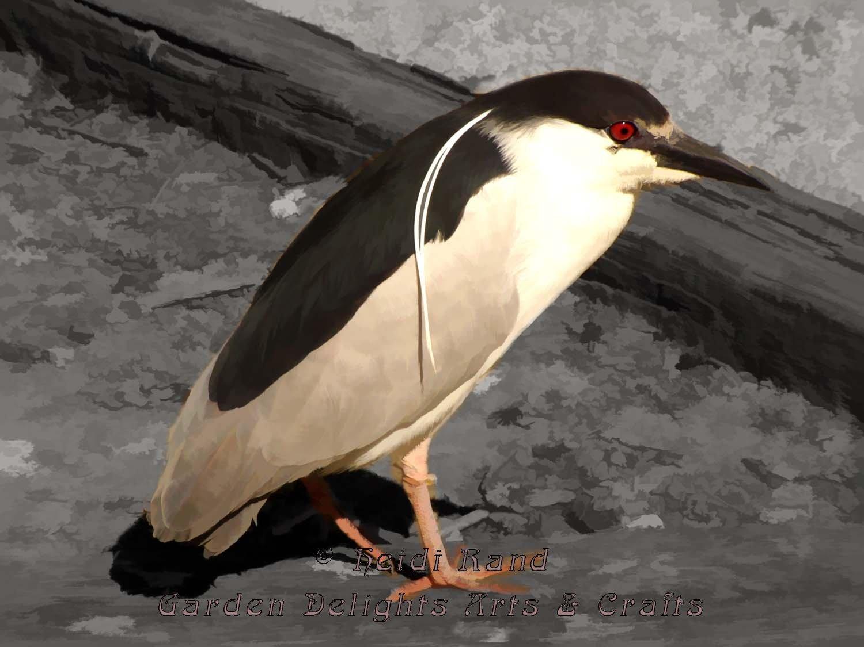 Heron at Lake Merritt