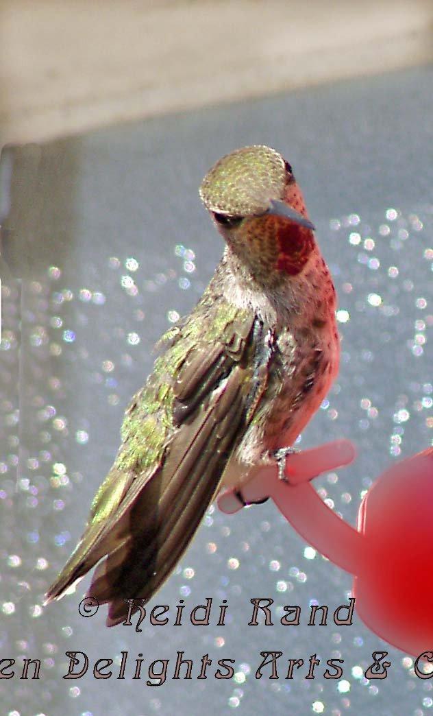 Hummingbird peering