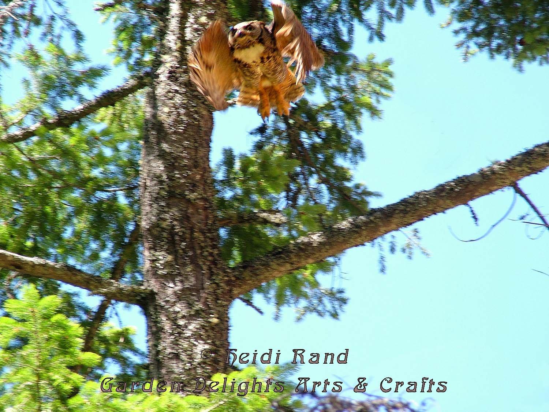Owl on Mount Tam