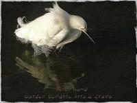 Egret Fishing Lake Merritt