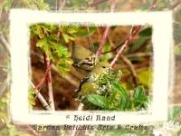 Finch in a tree