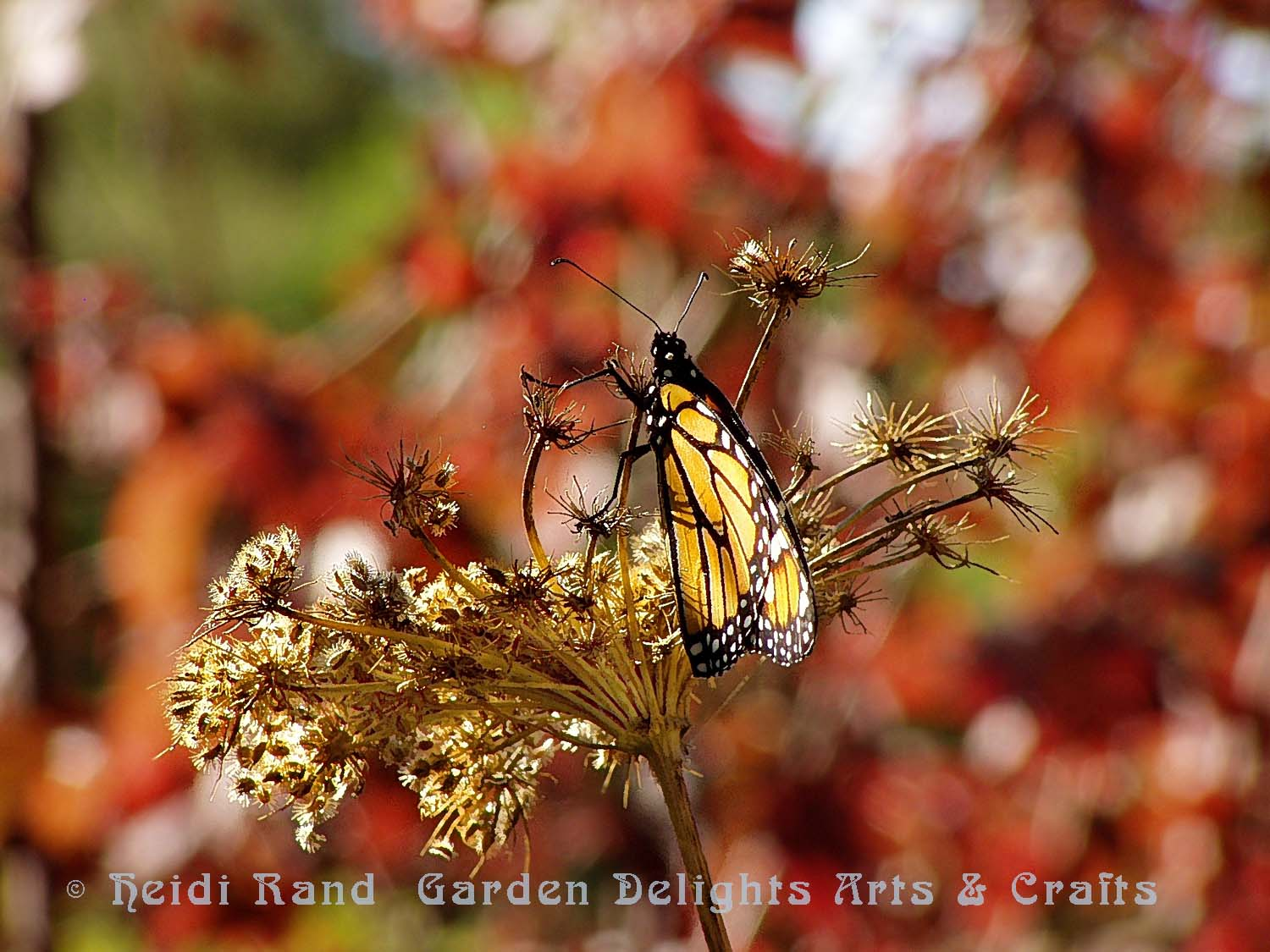 Monarch butterfly in the woods