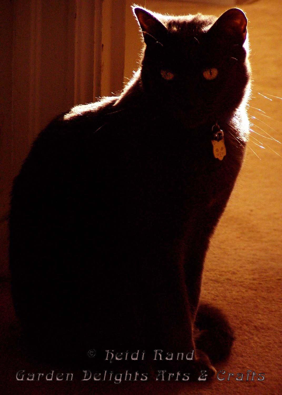Lars in dark
