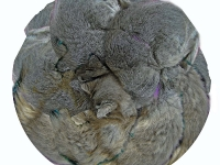 Cat round collage