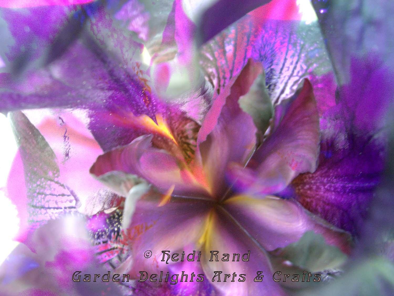 Iris dream collage