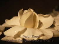 Gardenia floating