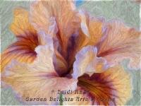 Iris painterly