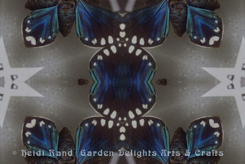 Faithful beauty moth