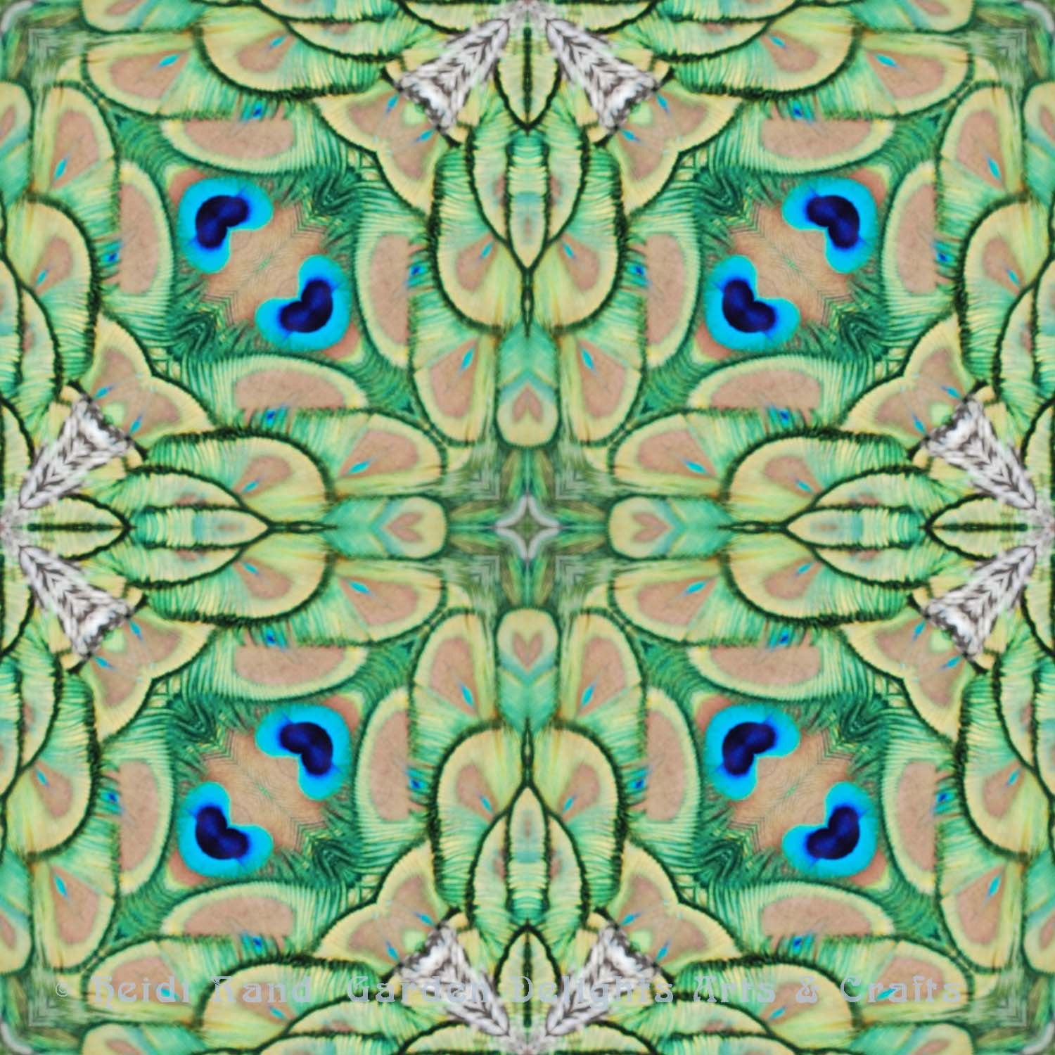 Peacock feathers bright