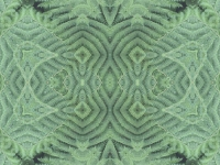 Green fern oblong
