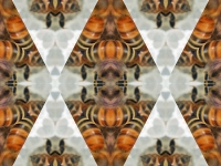 Honey bees geo
