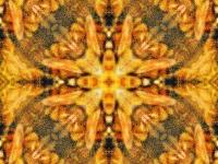 Honey bees quartet