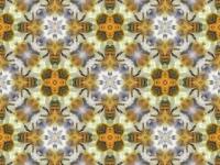 Honey bees kaleidoscope