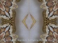 Prometha moth single