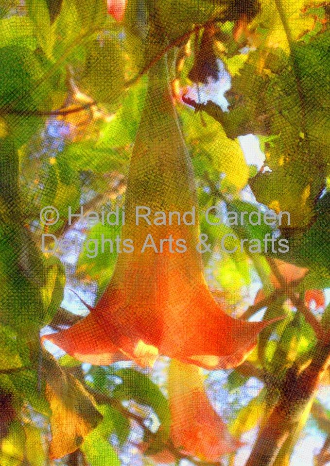 Angel's Trumpet Flower (brugmansia). Greeting card 1082