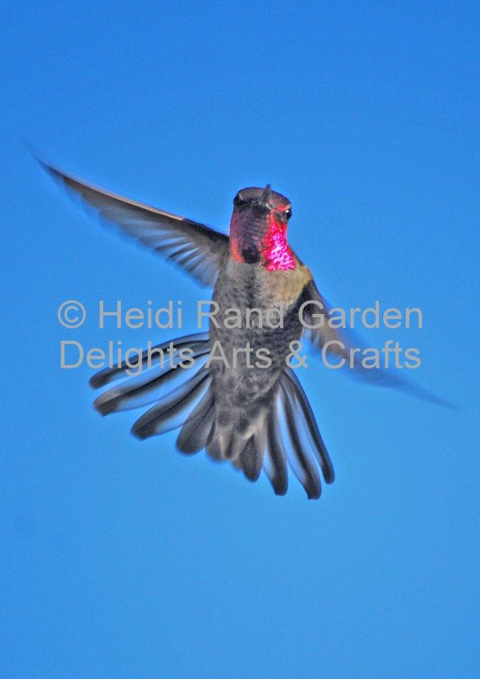 Hummingbird dance. Greeting card 1015
