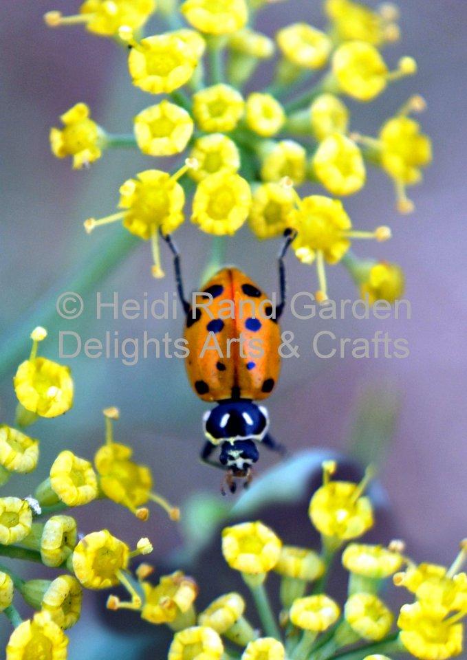 Ladybug stretching. Greeting card 1053