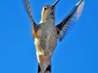 Hummingbird wings. Greeting card 1014