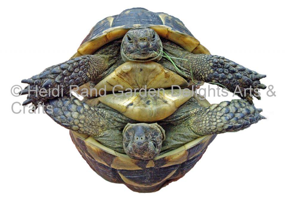 Tortoise round. Greeting card 1354