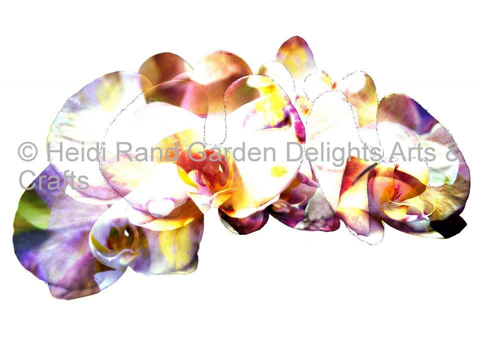 Rainbow Phalaenopsis Orchids. Greeting card 1086