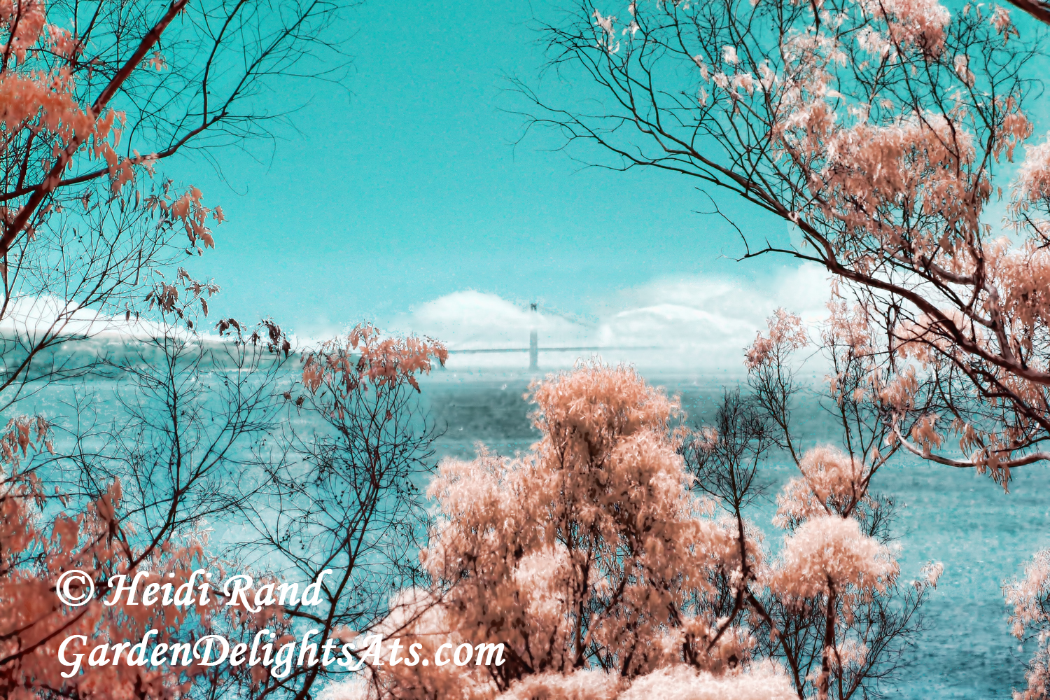 Albany Hill and Golden Gate Bridge infrared