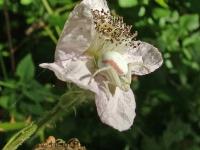 Spider on wild flower