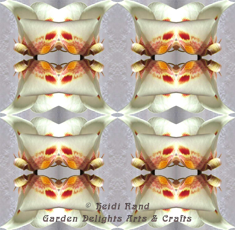 Calchortus kaleidoscope
