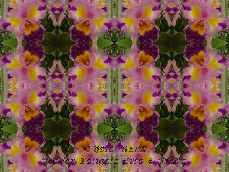 Cattleya kaleidoscope