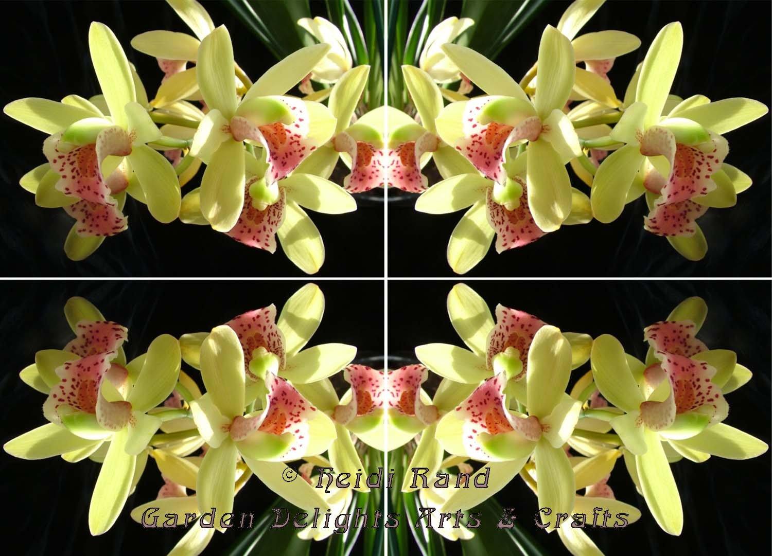 Cymbidium bright kaleidoscope