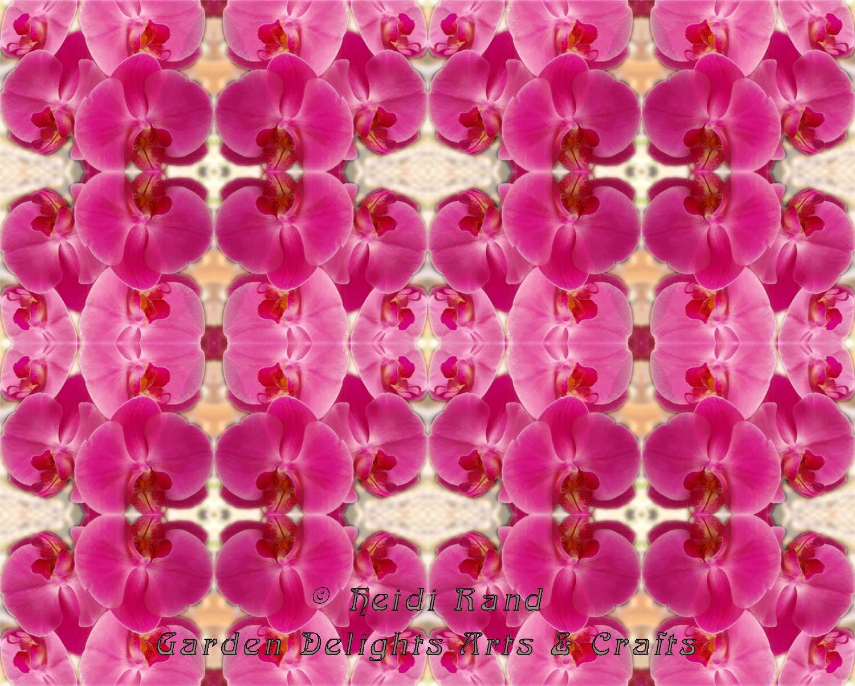 Bright pink phalaenopsis kaleidoscope