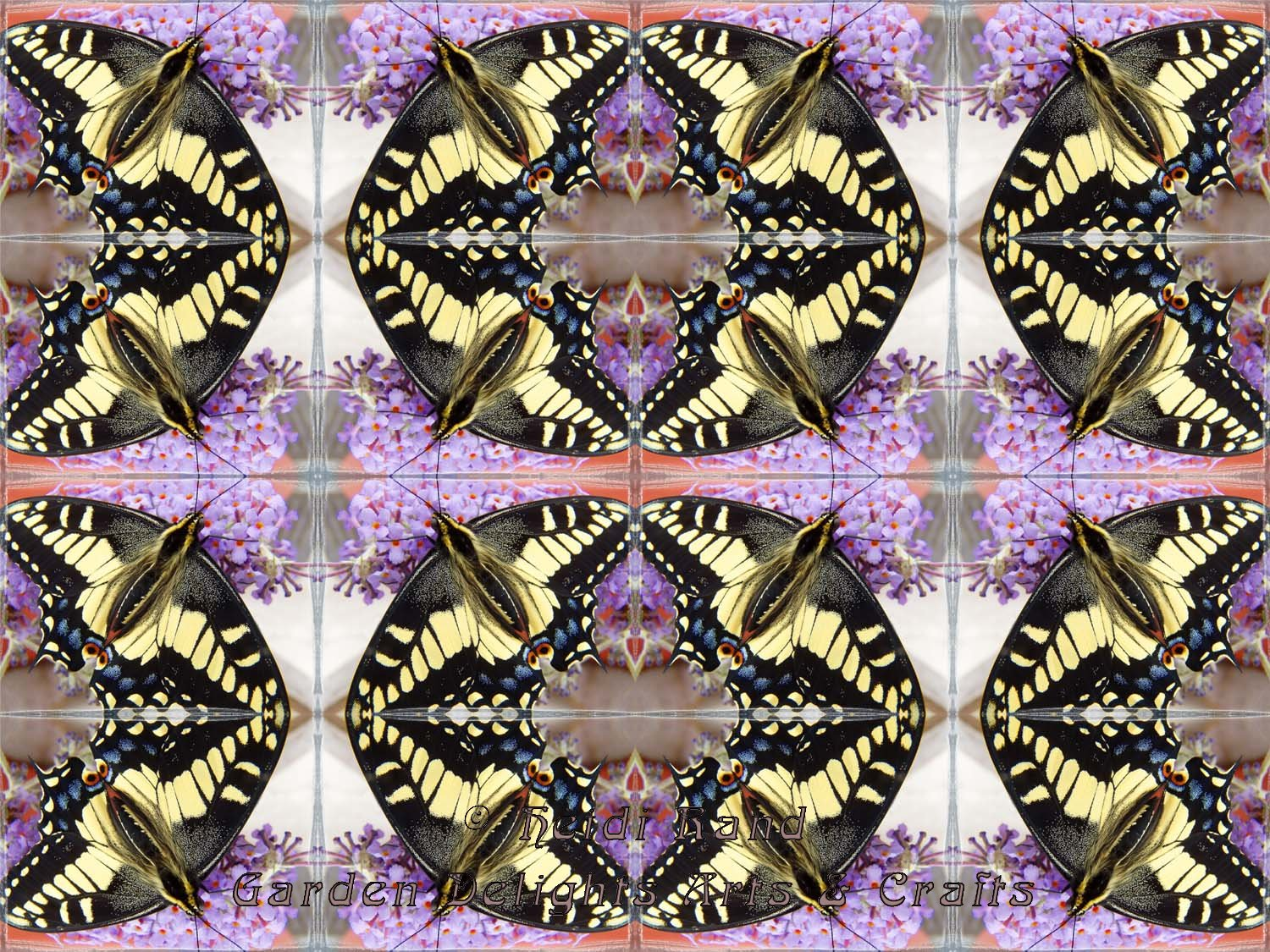 Swallowtail butterfly with buddleia kaleidoscope