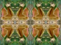 Butterscotch rose kaleidoscope