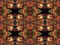 Cymbidum tracyanum kaleidoscope